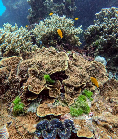 A DAY ON THE GREAT BARRIER REEF